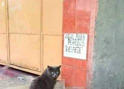 Enlace a A mi me vas a decir lo que tengo que hacer, ¿no has visto que soy un gato?