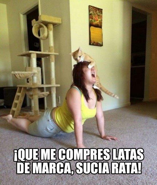 Meme_otros - Hola, mi gato me hace bullying