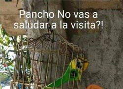 Enlace a ¿Pancho?