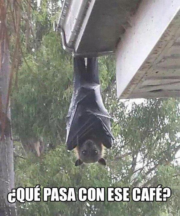 Meme_otros - Cuando se comprometen a hacer café