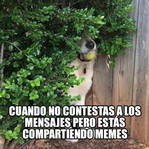Meme_otros - Culpable