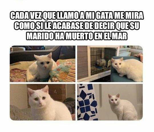 Meme_otros - Puedo ver el drama en sus ojos