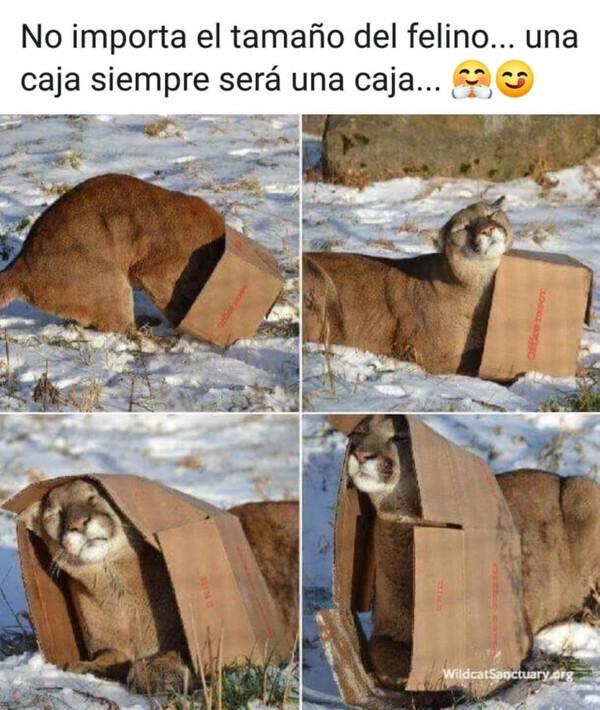 Meme_otros - Una caja es una caja