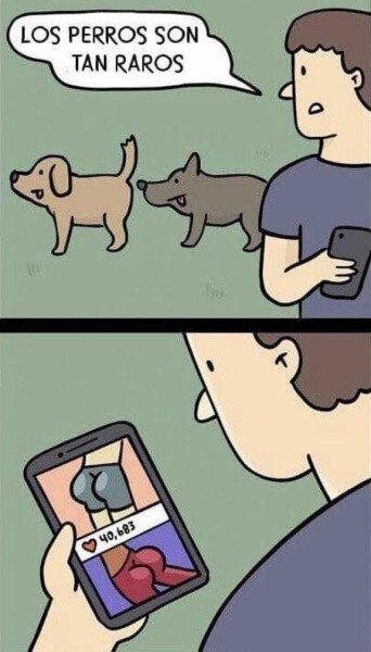 Otros - Estos animales y sus costumbres...