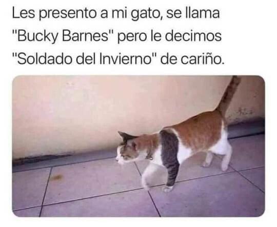 Meme_otros - Bucky el gato