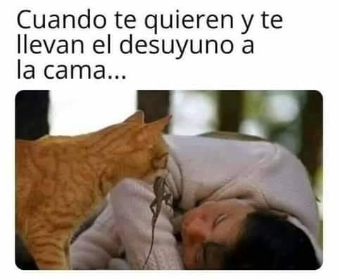 Meme_otros - Zarpitas, podrías ser un poco más romántico