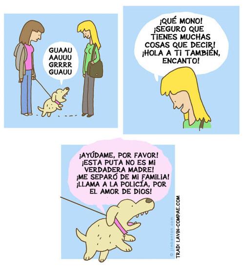 Otros - Si nuestras mascotas hablasen ¿qué nos dirían?