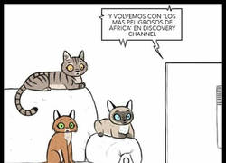 Enlace a ¿Podrías considerarse un MHYV para gatos?
