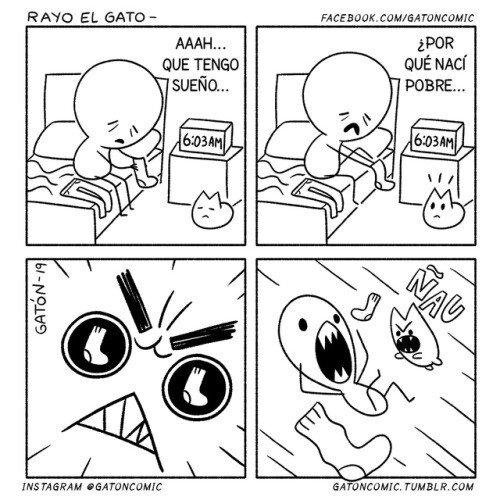 Otros - ¿Para qué quieres un despertado cuando tienes un gato?