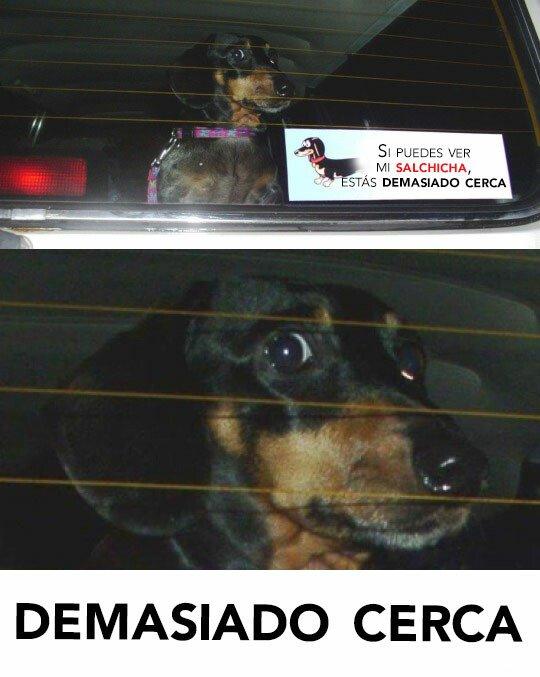 Meme_otros - Creo que sería más efectiva una pegatina con la cara del perro real