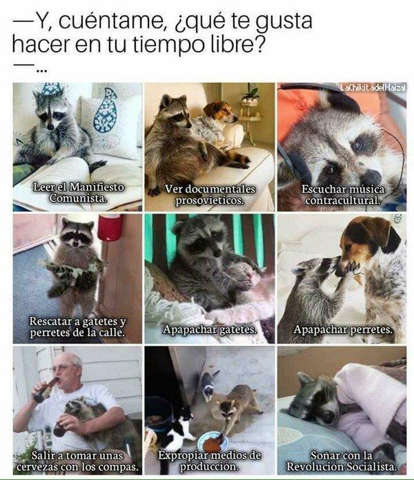 Meme_otros - Pero sobre todo apapachar gatetes y perretes