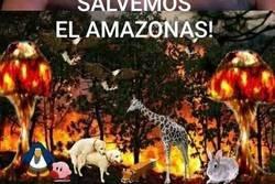 Enlace a Je suis Amazonas
