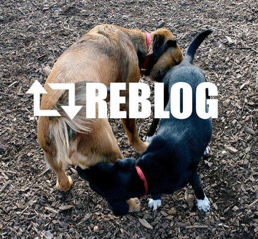 Meme_otros - Reblog en la vida real