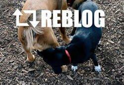 Enlace a Reblog en la vida real
