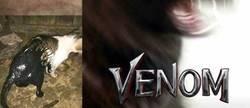 Enlace a Venom