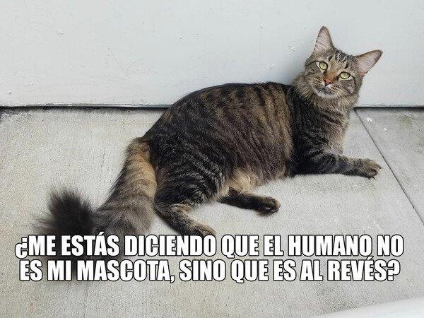 Meme_otros - Mascotas humanas