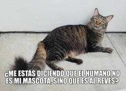 Enlace a Mascotas humanas