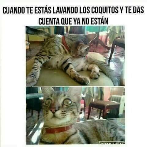 Meme_otros - Adios coquitos