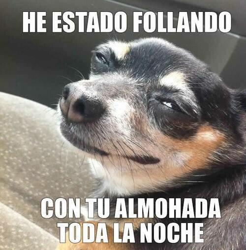 Meme_otros - ¿Hueles eso? Es eau de petit chihuahua