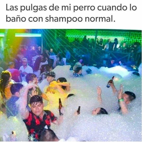 Meme_otros - Fiesta de la espuma