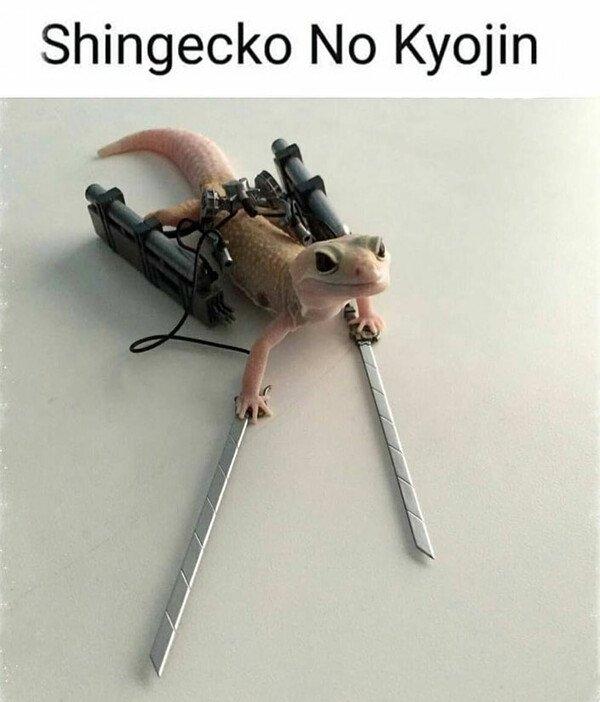 Meme_otros - Shingecko no kyojin