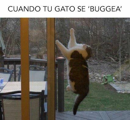 Meme_otros - Se supone que tienes que cazar bichos, no buggerarte tú