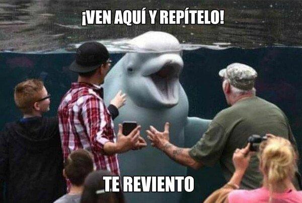 Meme_otros - Te reviento
