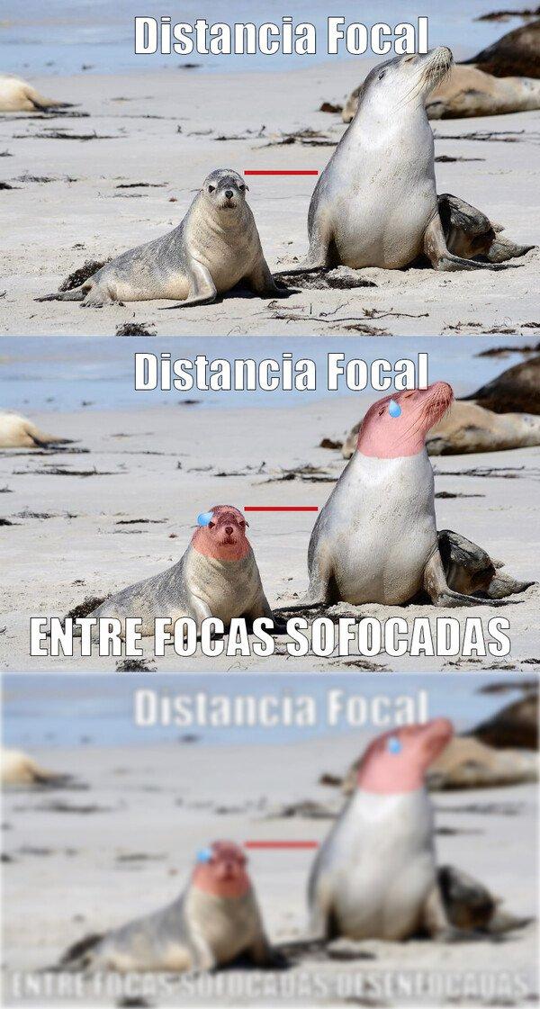 Meme_otros - Focas y sus chistes