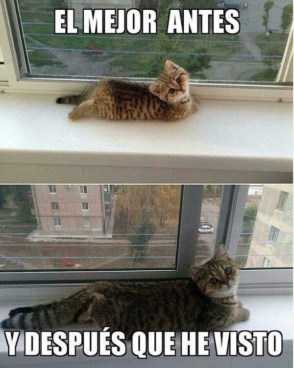 Meme_otros - Antes y después gatuno