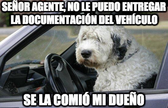 Meme_otros - Perro conductor, poco mordedor
