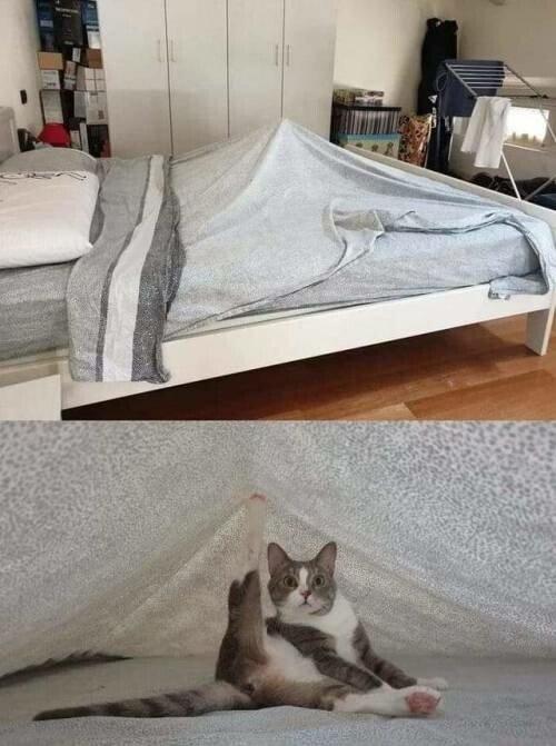 Otros - Abstenerse malpensados, aquí solo hay lugar para amantes de los gatos