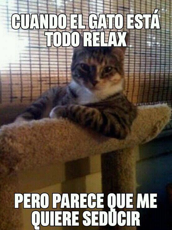 El_arte_de_amarte - gato chill