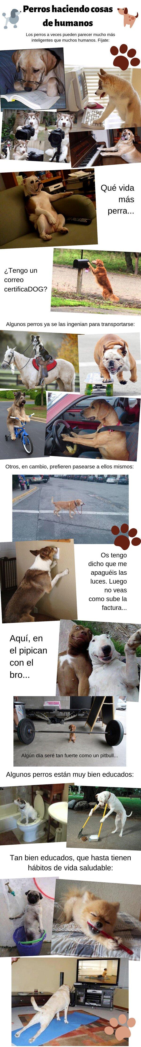 Meme_otros - Perros haciendo cosas de humanos