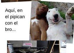 Enlace a Perros haciendo cosas de humanos