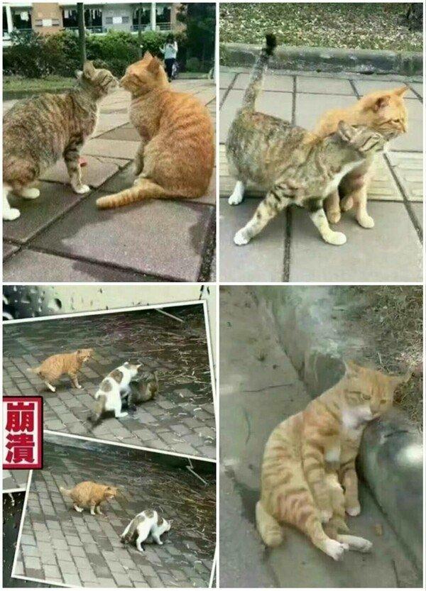 Meme_otros - El gato con cuernos