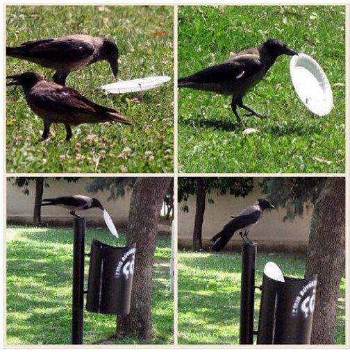 Meme_otros - Este pájaro tiene más civismo que muchos humanos
