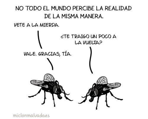 mierda,moscas