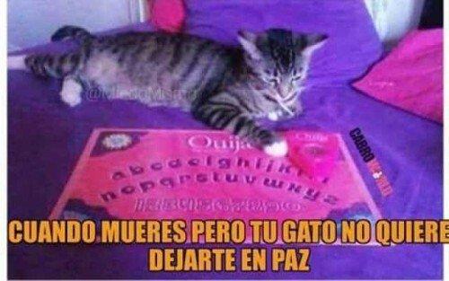 Meme_otros - Tu gato siempre estará ahí