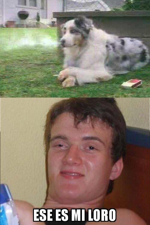 Colega_fumado - ¿Un loro?
