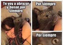 Enlace a Cuando nace una loca de los gatos, muere la felicidad de un gato