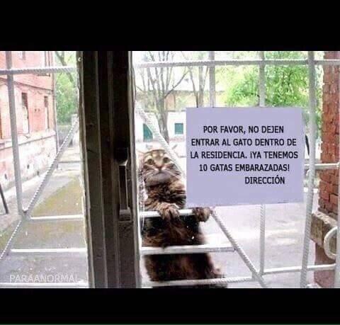 Meme_otros - El gato de Julio Iglesias