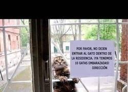Enlace a El gato de Julio Iglesias