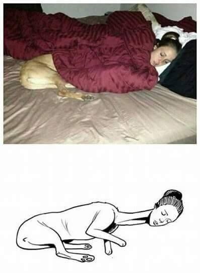 Meme_otros - La increíble chica-perro