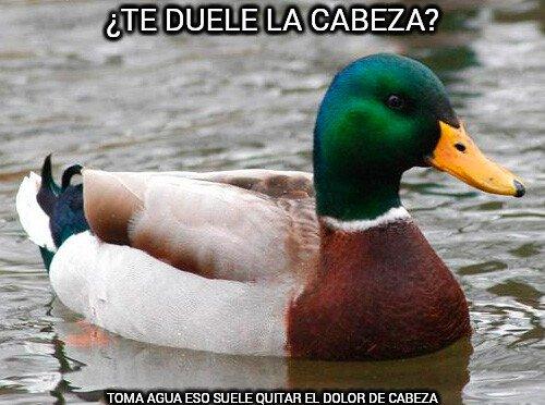Pato_consejero - Dolor de cabeza