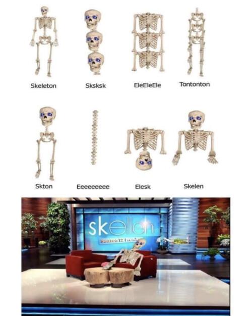 Otros - Así está formado un esqueleto