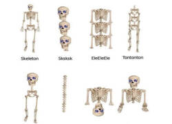 Enlace a Así está formado un esqueleto