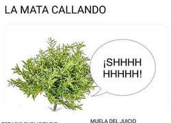 Enlace a Humor literal