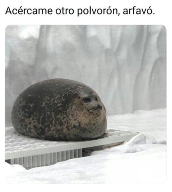 comer,foca,gordo,navidad,polvorón