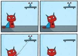 Enlace a Los poderes de SpiderCat no serían demasiado útiles