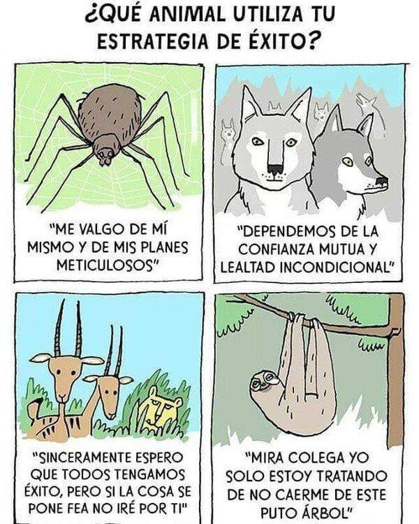 Meme_otros - ¿Qué animal utiliza tu estrategia de éxito?